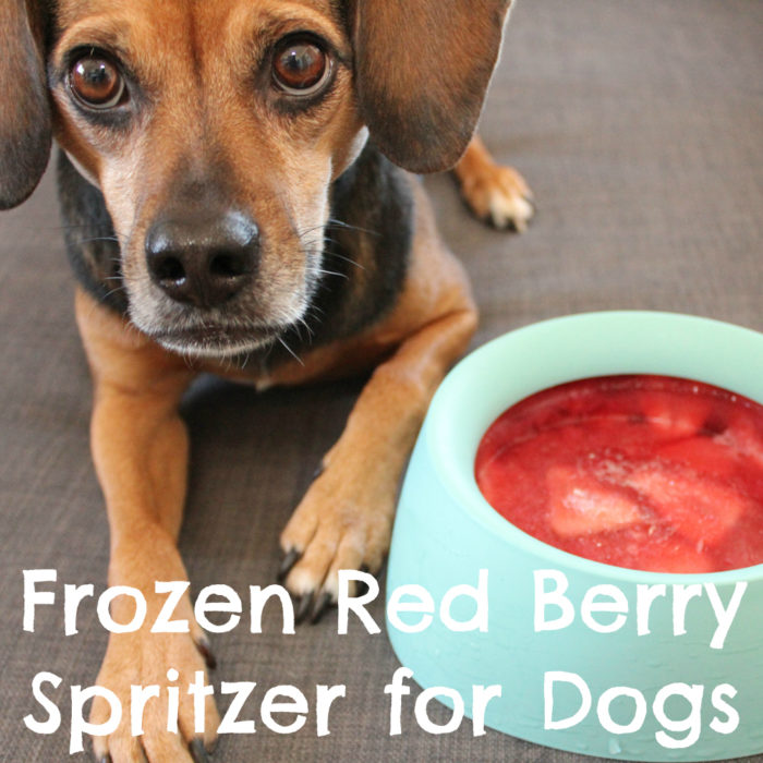 Frozen Red Berry Spritzer for Dogs {dog treat, sleepypod, summer, strawberry, raspberry, recipe} - #sponsored by Sleepypod