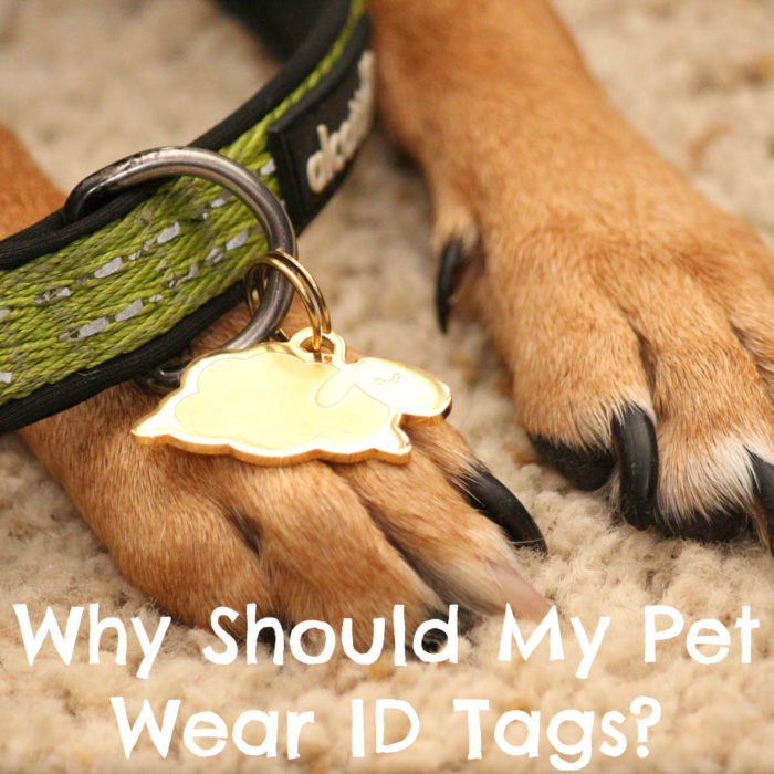 Why Should My Pet Wear ID Tags? | #sponsored by Sleepypod | {dog, cat, pet, lost dog, id tag}