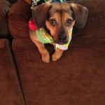 FitDog Friday: Luna is Ready to Run!