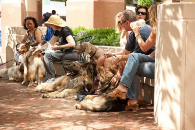 Enjoy a relaxing day with your dogs - Photo Courtesy of GoodDogz.org