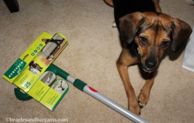 Luna helps clean up with our new Mega Roller from Evercare Lint.