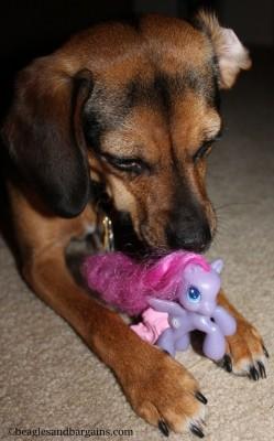 Luna loves sniffing horses!