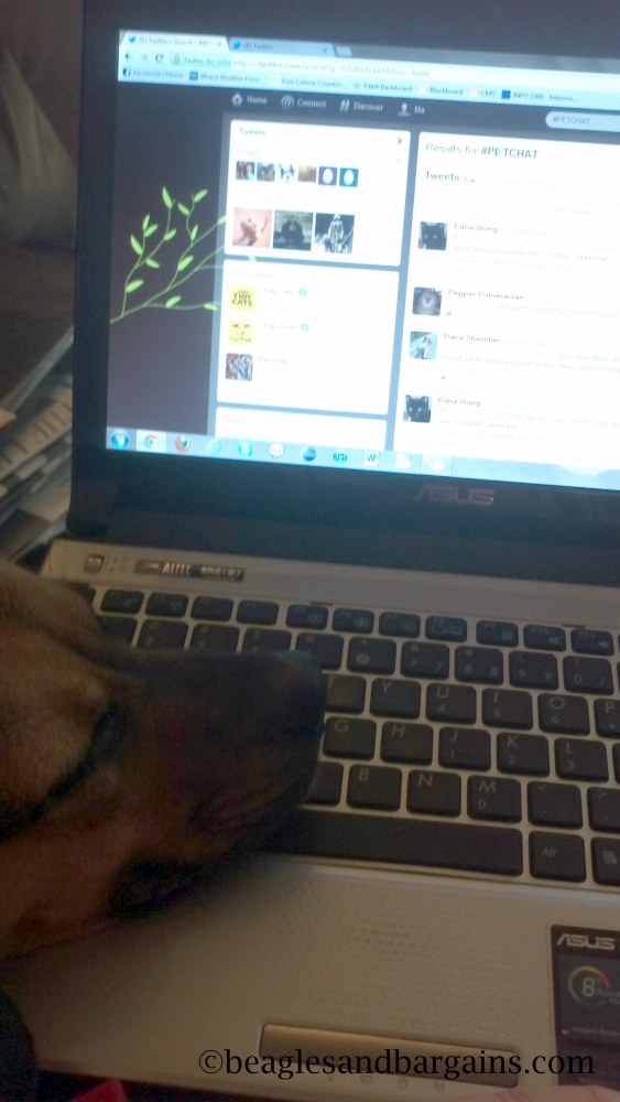 We love Twitter chats, but sometimes Luna is too exhausted to type.