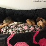 Wordless Wednesday: Sleeping on Clouds
