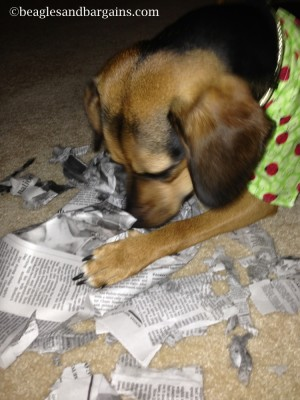 Luna shows off the newly shredded packing paper.