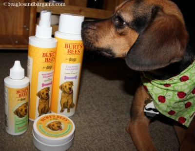 Luna thinks Burt's Bees Natural Pet Care smells good!