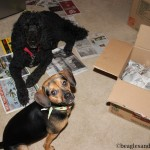 Wordless Wednesday: Two Helpful Dogs