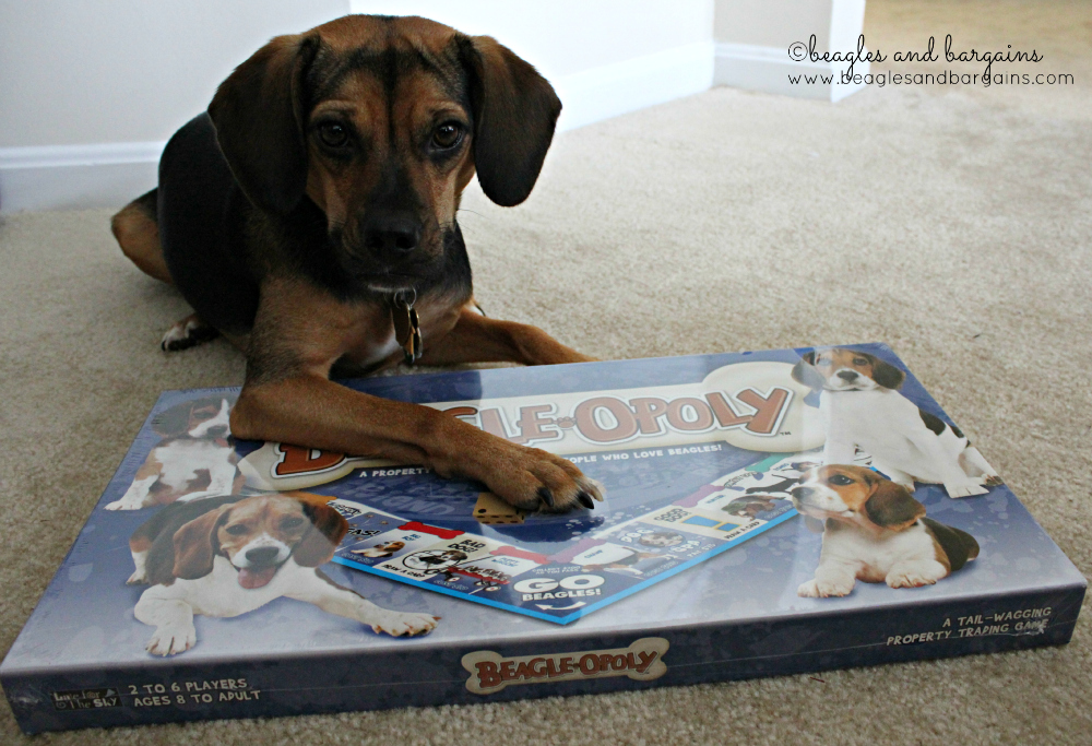 Will you play Beagleopoly with Luna?