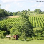 Pet Friendly Winery Wednesday