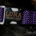 Product Review: Luna Gets Stylish with dogIDs PLUS Coupon!