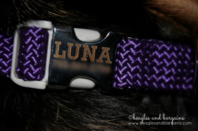 The Mendota Rolled Braided Dog Collar comes with a personalize buckle! No need for an id!