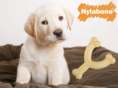 Nylabone Wishbone - Photo Courtesy of Coupaw