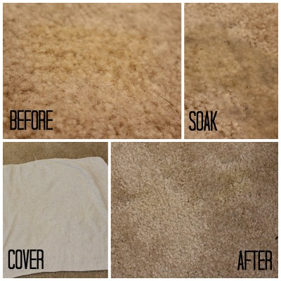 The before and after results from the Pet Odor and Stain Eliminator made by Unique Natural Products.