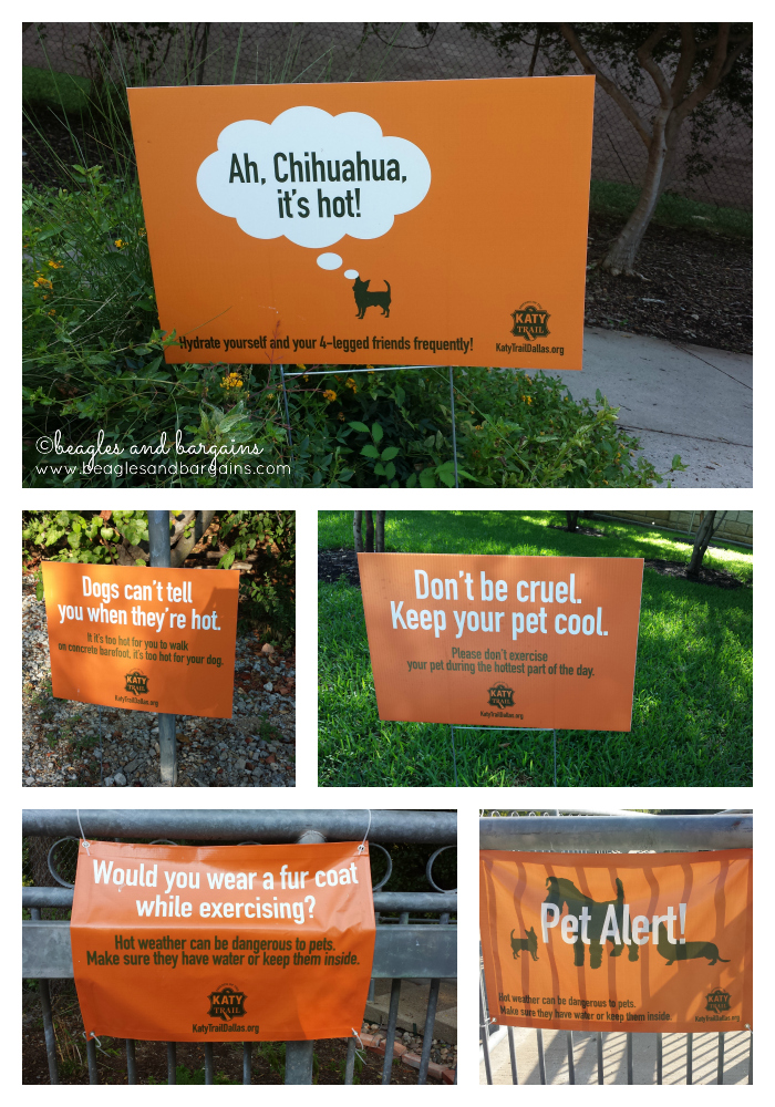Katy Trail Dallas dog safety