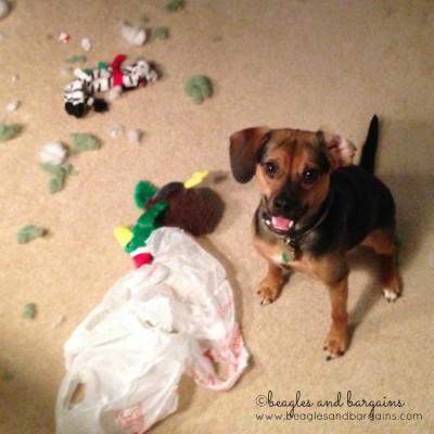 Enter The Messiest Pet Photo Contest!