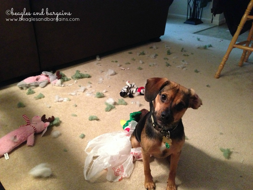 Luna, the Guilty Dog, makes a mess!