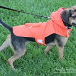 Product Review: Staying Dry with Just4MyPet