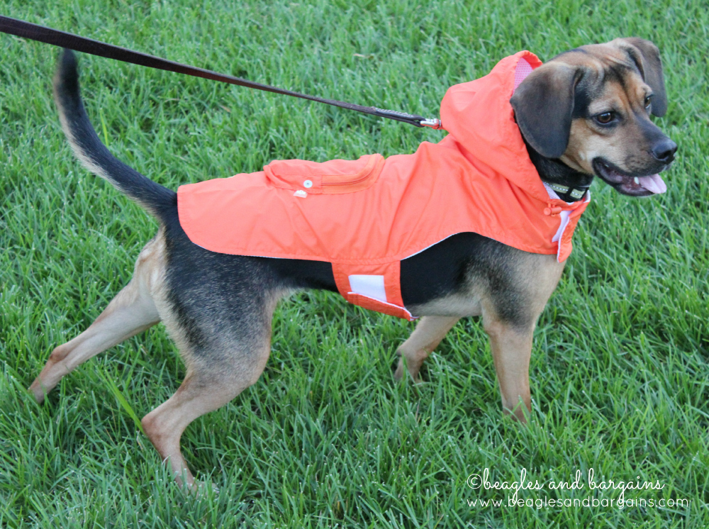 Luna has never looked cuter as she does in her Just4MyPet Personalized Raincoat.