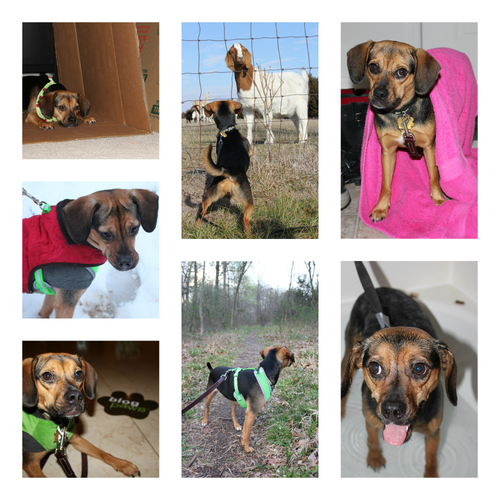 We also experienced a wide range of other activities. Moving, snow, BlogPaws, hiking, a hurricane, bath time, and meeting goats were just a few!