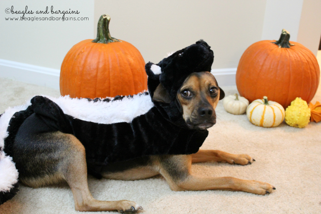 Luna dresses as a skunk for Halloween