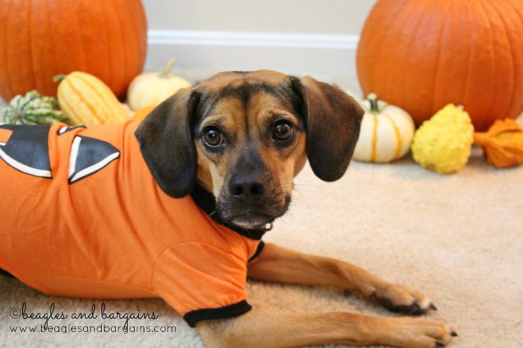 Luna tries out her pumpkin t-shirt!