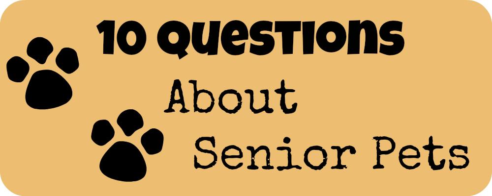 10 Questions About Senior Pets