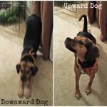 Doga: Dogs Doing Yoga