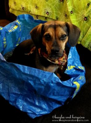 Luna goes to IKEA