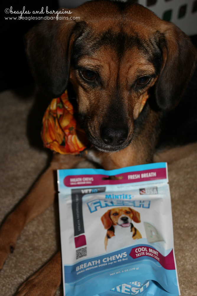 Luna sees a fellow Beagle on the Minties Fresh package. These must be good!