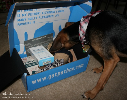 Luna checks out each product in her PetBox one by one.