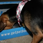 Surprise Your Pet Every Month with #PetBox