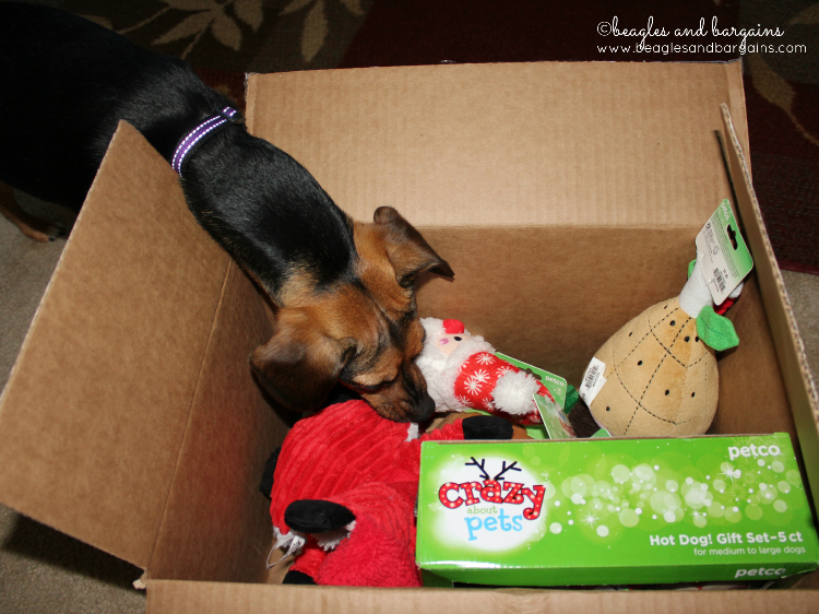 Luna investigates the amazing Holiday Collection from Petco.