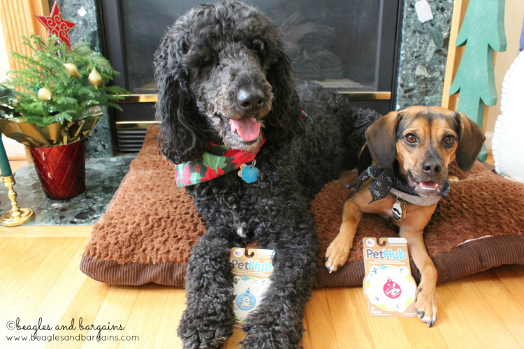 Cousin Keto and Luna are all smiles about their new PetHub tags.