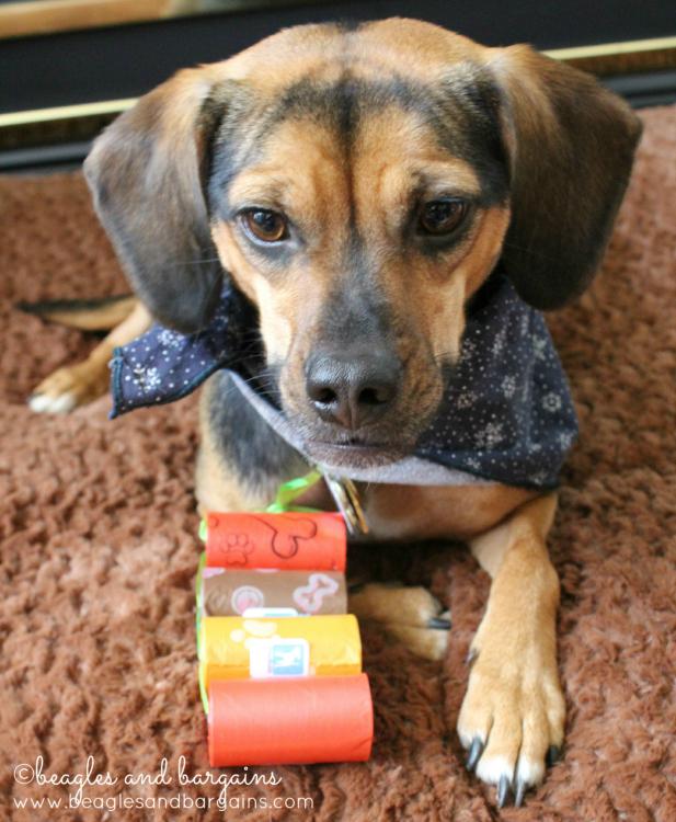 Luna wonders if better poop bags from PoopBuddy means more walks.