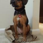 Luna Reenacts Beagles and Bargains Logo