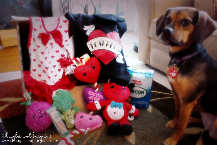 Petco has fun Valentine's Day toys and accessories!