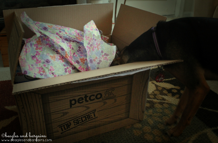 What is inside this Top Secret Petco box?