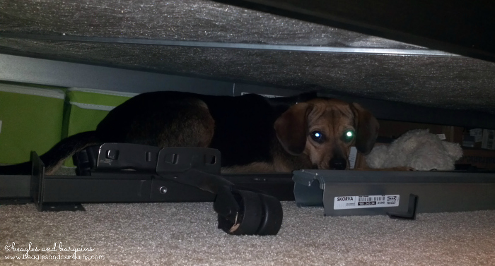 Luna hides under beds and other tight spaces.