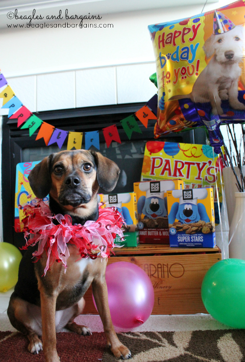 "Luna says ""Let's Party!"" with Blue Dog Bakery."