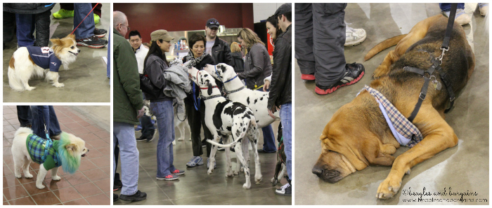 The Super Pet Expo had dogs of all different sizes!