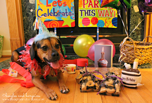 Luna shows off her Three Dog Bakery GRRrand Assort-mutt tray and party favors.