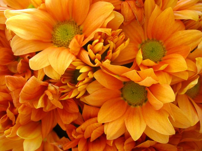 Bright orange flowers