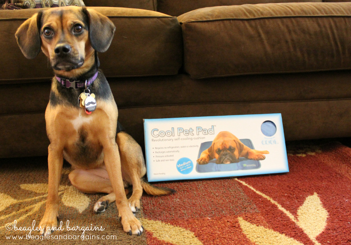 Luna poses with her new Cool Pet Pad from The Green Pet Shop