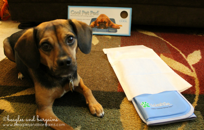 The Green Pet Shop Cool Pet Pad is packed up and ready to travel.