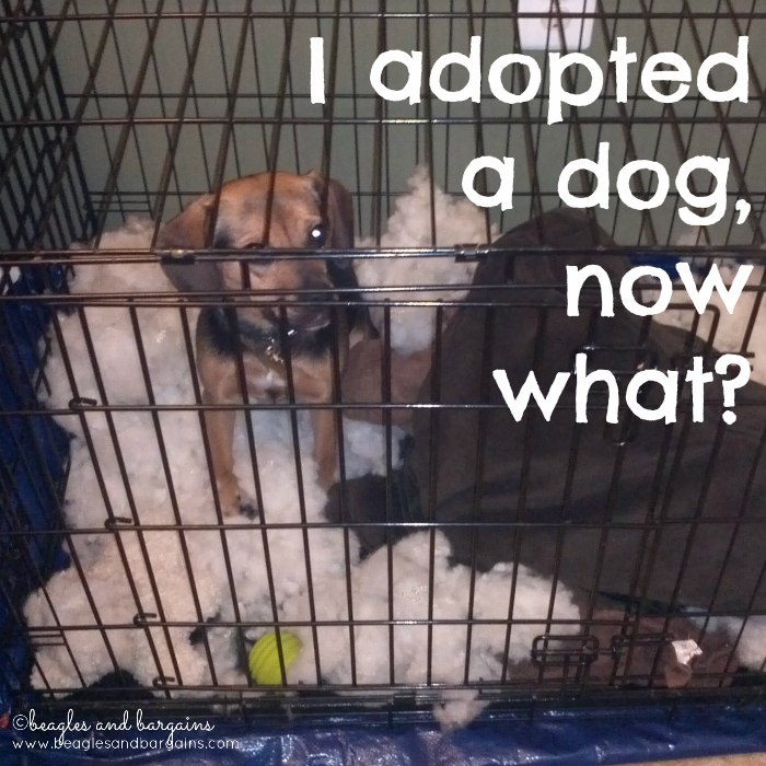 I adopted a dog, now what?
