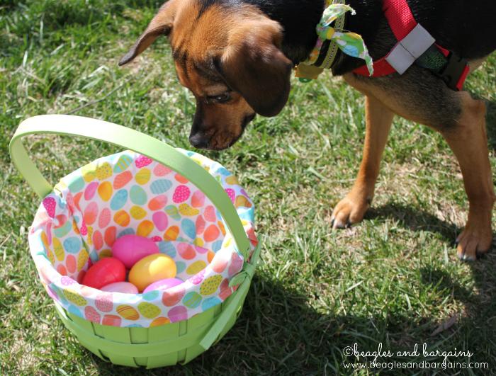 Have an Easter egg hunt.