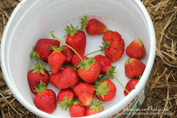 Pick fresh strawberries.