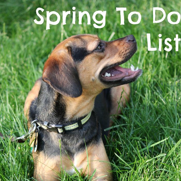 Spring to do list.