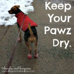 K is for Keep Your Pawz Dry #atozchallenge