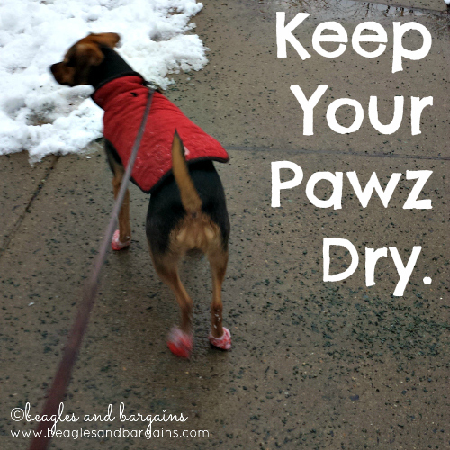 Keep Your Pawz Dry
